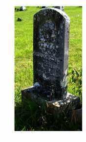 MORRISON, PHEBE - Adams County, Ohio | PHEBE MORRISON - Ohio Gravestone Photos