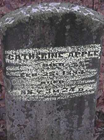 APPLE, CATHERINE - Champaign County, Ohio | CATHERINE APPLE - Ohio Gravestone Photos