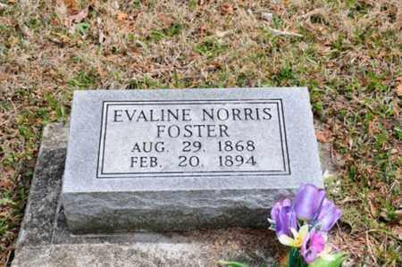 FOSTER, EVALINE - Coshocton County, Ohio | EVALINE FOSTER - Ohio Gravestone Photos