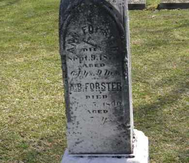 FORSTER, ANN - Erie County, Ohio | ANN FORSTER - Ohio Gravestone Photos