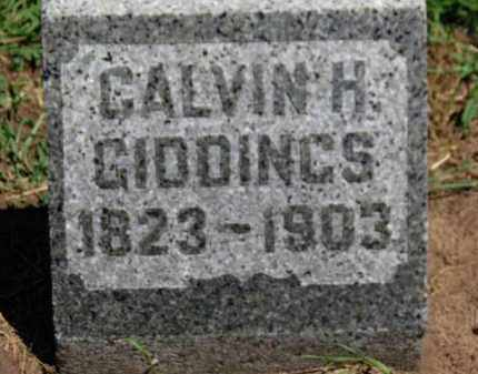 GIDDINGS, CALVIN H. - Erie County, Ohio | CALVIN H. GIDDINGS - Ohio Gravestone Photos