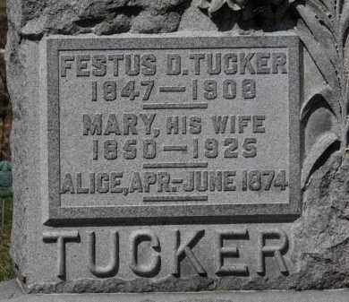TUCKER, ALICE - Erie County, Ohio | ALICE TUCKER - Ohio Gravestone Photos