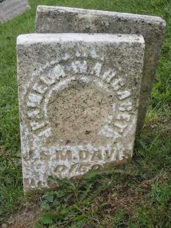 DAVIS, PAMELA MARGARET - Holmes County, Ohio | PAMELA MARGARET DAVIS - Ohio Gravestone Photos
