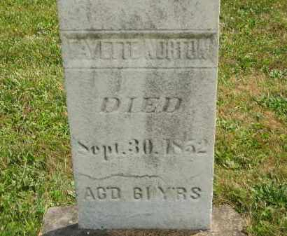 NORTON, FAYETTE - Lorain County, Ohio | FAYETTE NORTON - Ohio Gravestone Photos
