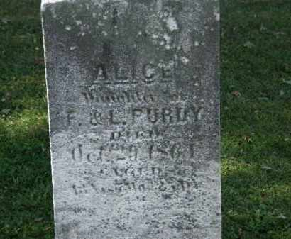 PURDY, ALICE - Lorain County, Ohio | ALICE PURDY - Ohio Gravestone Photos