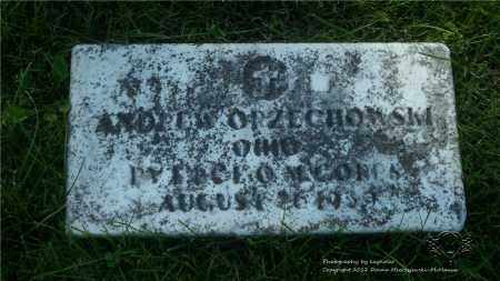 ORZECHOWSKI, ANDREW - Lucas County, Ohio | ANDREW ORZECHOWSKI - Ohio Gravestone Photos