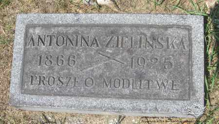 ZIELINSKA, ANTONINA - Lucas County, Ohio | ANTONINA ZIELINSKA - Ohio Gravestone Photos