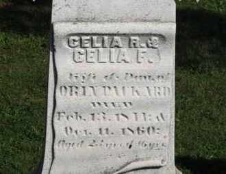 PACKARD, CELIA R. - Medina County, Ohio | CELIA R. PACKARD - Ohio Gravestone Photos