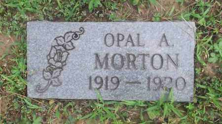 MORTON, OPAL A. - Meigs County, Ohio | OPAL A. MORTON - Ohio Gravestone Photos