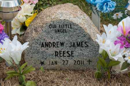 REESE, ANDREW JAMES - Richland County, Ohio | ANDREW JAMES REESE - Ohio Gravestone Photos