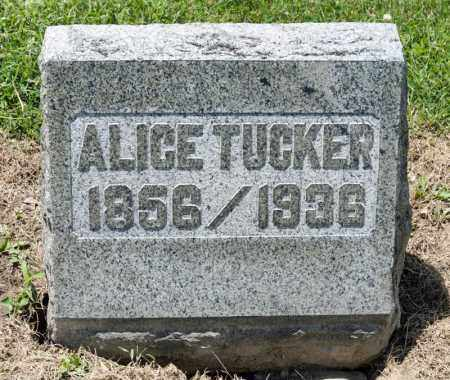 FACKLER TUCKER, ALICE ELVERA - Richland County, Ohio | ALICE ELVERA FACKLER TUCKER - Ohio Gravestone Photos