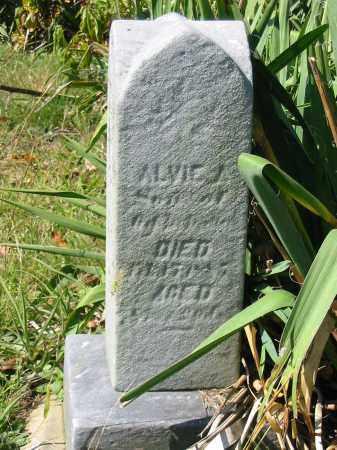 MILLER, ALVIE A - Stark County, Ohio | ALVIE A MILLER - Ohio Gravestone Photos