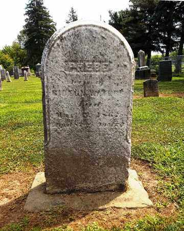 RHODES WATERS, PHEBE - Trumbull County, Ohio | PHEBE RHODES WATERS - Ohio Gravestone Photos