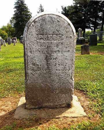 WATERS, PHEBE - Trumbull County, Ohio | PHEBE WATERS - Ohio Gravestone Photos