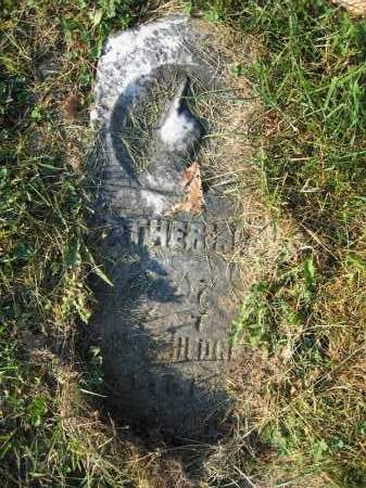 HEDGES, CATHERINA - Union County, Ohio | CATHERINA HEDGES - Ohio Gravestone Photos
