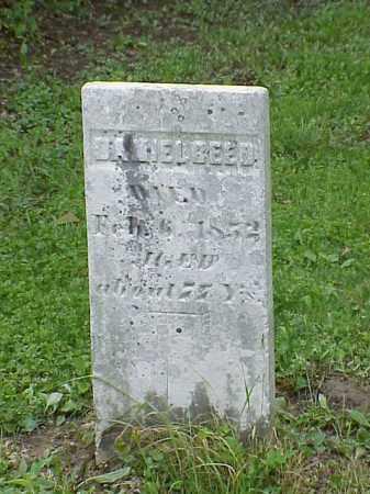 REED, DANIEL - Union County, Ohio | DANIEL REED - Ohio Gravestone Photos